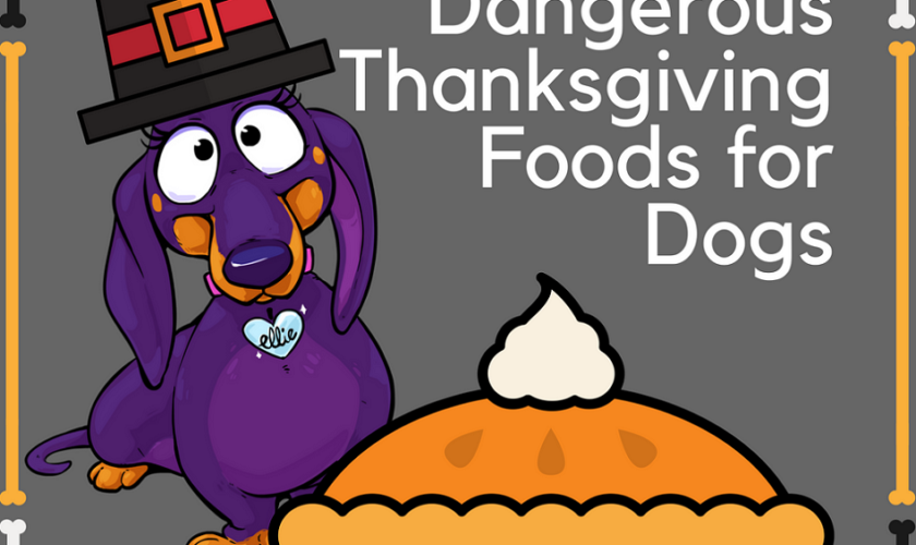 Ten Dangerous Thanksgiving Foods to Feed Your Dog