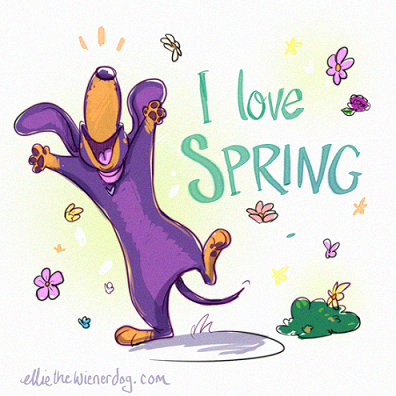 Celebrate the First Day of Spring with Ellie the Wienerdog